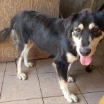 Psy ktore nasli domov - Utulok Nove Zamky