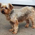 Psy na adopciu - Utulok Nove Zamky